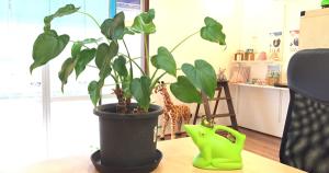 コワーキングスペース観葉植物